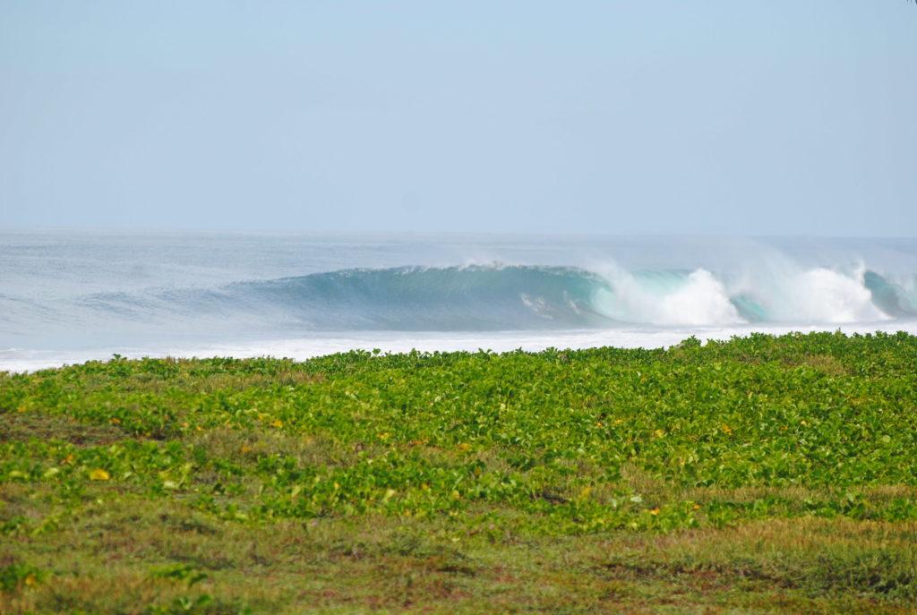 Hawai barrels