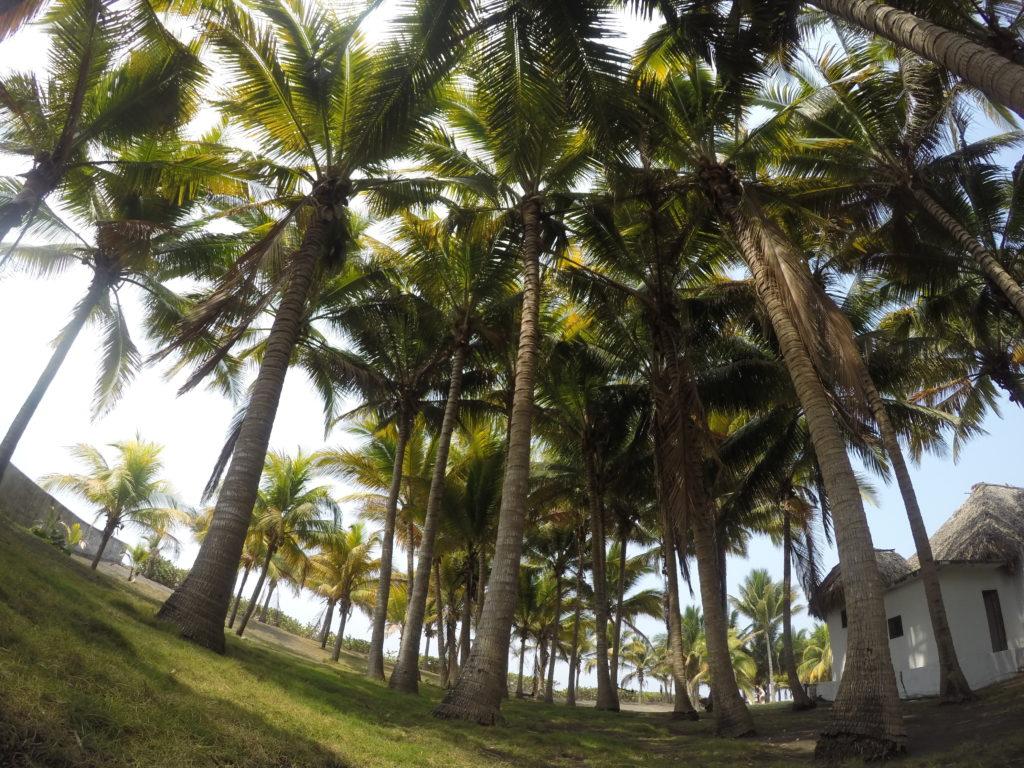 Cocori forest1